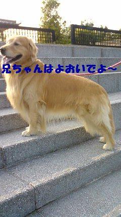 b0127531_2036192.jpg