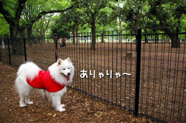 土曜日のおっきな公園_c0062832_20245624.jpg