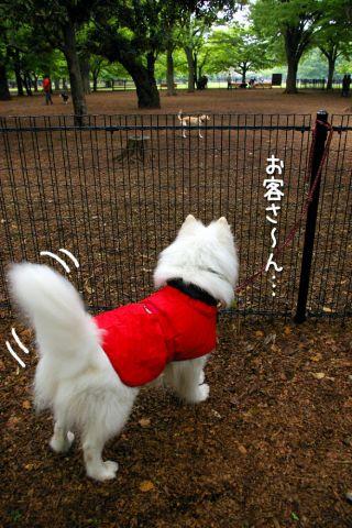 土曜日のおっきな公園_c0062832_2025410.jpg