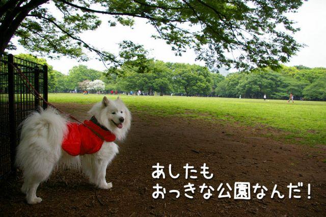 土曜日のおっきな公園_c0062832_20255641.jpg