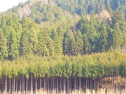 京都北山杉ツアーその1◇台杉見学_f0105533_15214913.jpg