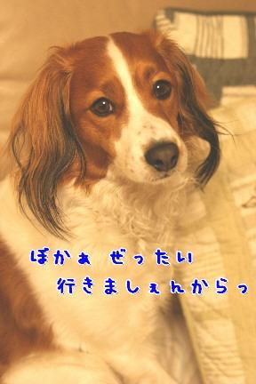 d0013149_1504642.jpg