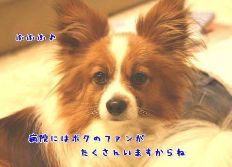 d0013149_211919.jpg
