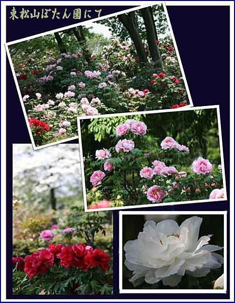 ぼたん園とポピー畑_f0030085_21543053.jpg