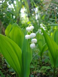 庭の花_e0143294_16305035.jpg