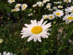 庭の花_e0143294_1630683.jpg