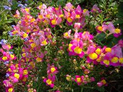 庭の花_e0143294_16324764.jpg