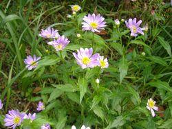 庭の花_e0143294_1633775.jpg