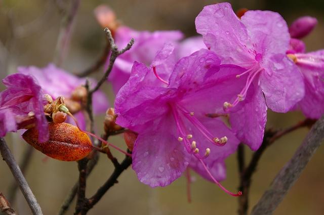 雨上がりの庭の花_f0138096_1222512.jpg