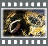 b0020911_0361489.jpg