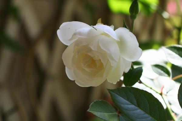 b0064411_6242549.jpg