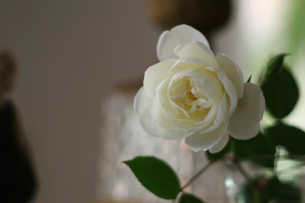 b0064411_628964.jpg