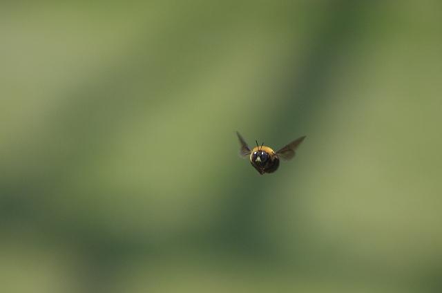 蜂ほか・・・_c0110922_2046102.jpg