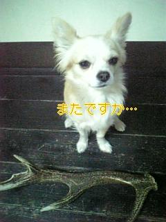 f0148927_19184998.jpg