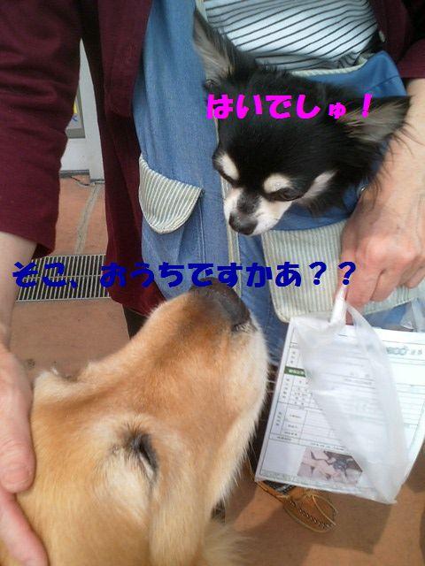 b0127531_16484635.jpg