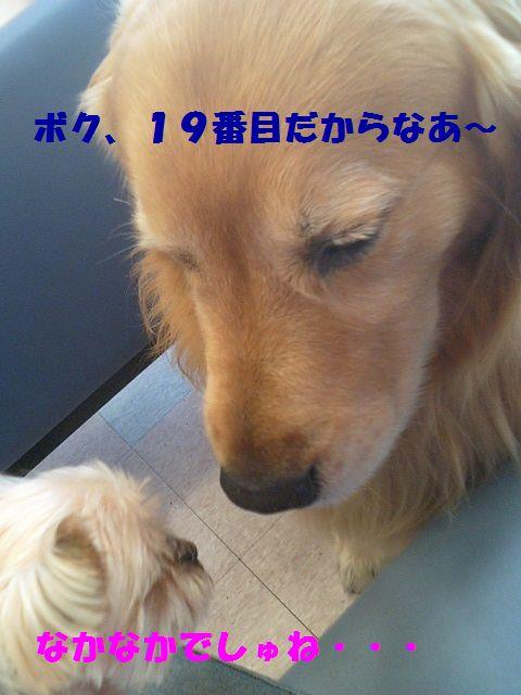b0127531_16524758.jpg