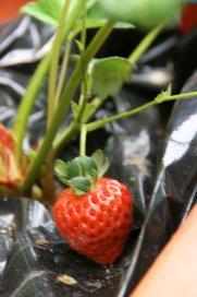 初・収穫_d0147742_20385549.jpg