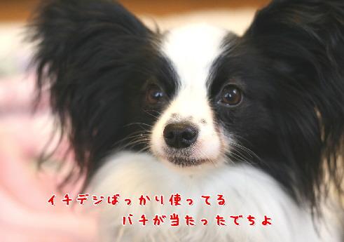 d0013149_8581656.jpg