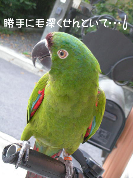 f0132055_0134767.jpg