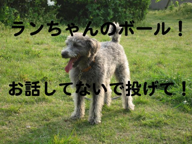 a0101958_1525680.jpg