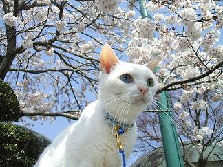 春~初夏~夏へ_c0138175_1526293.jpg
