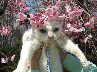 春~初夏~夏へ_c0138175_16552573.jpg