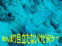 f0144385_23203246.jpg