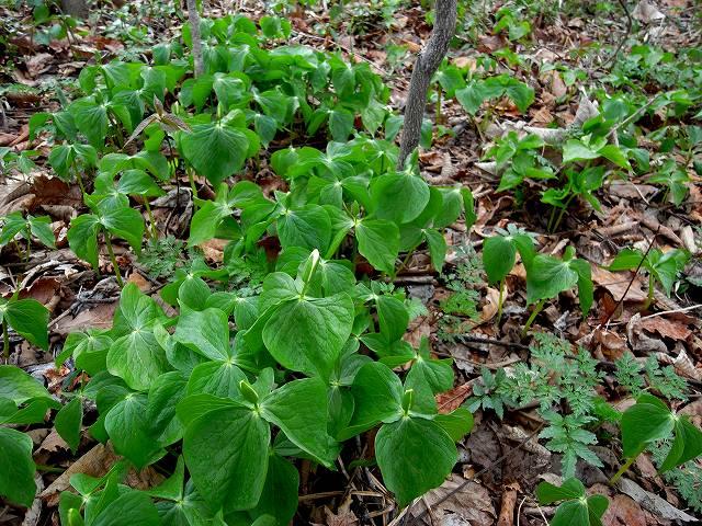 青葉公園の植物_f0138096_16281890.jpg