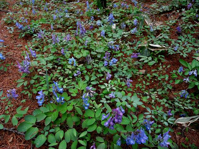 青葉公園の植物_f0138096_16285382.jpg
