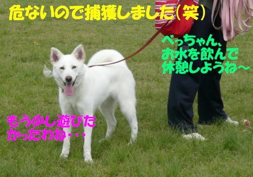f0121712_1452209.jpg