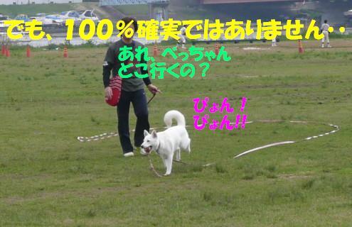 f0121712_1452585.jpg