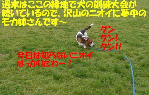 f0121712_1533942.jpg