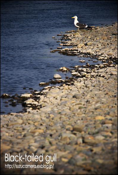 川なのに海_f0100215_23261814.jpg