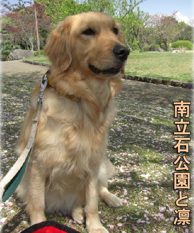 投稿) 南立石公園の樹木と花たち(1)  by:凛々_d0070316_4303292.jpg