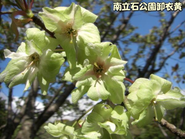 投稿) 南立石公園の樹木と花たち(1)  by:凛々_d0070316_4353336.jpg