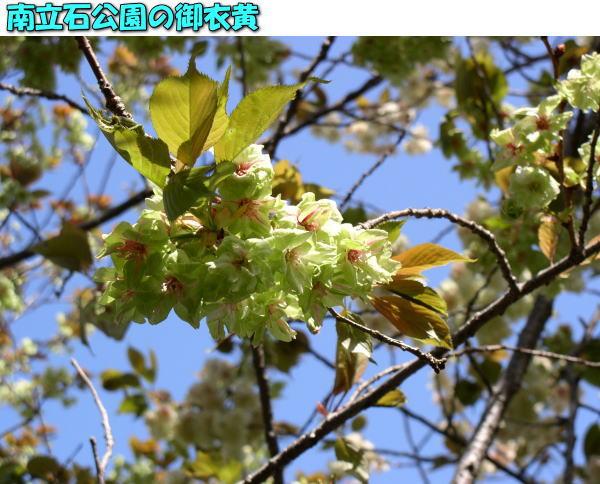 投稿) 南立石公園の樹木と花たち(1)  by:凛々_d0070316_4363359.jpg
