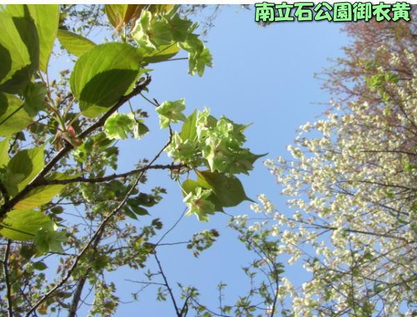 投稿) 南立石公園の樹木と花たち(1)  by:凛々_d0070316_436353.jpg