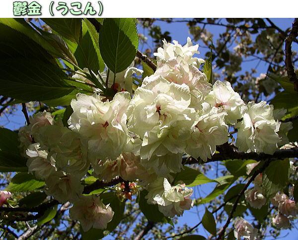 投稿) 南立石公園の樹木と花たち(1)  by:凛々_d0070316_4575843.jpg