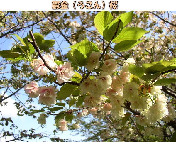 投稿) 南立石公園の樹木と花たち(1)  by:凛々_d0070316_4582991.jpg