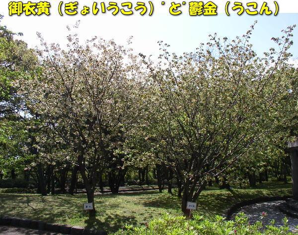 投稿) 南立石公園の樹木と花たち(1)  by:凛々_d0070316_459142.jpg