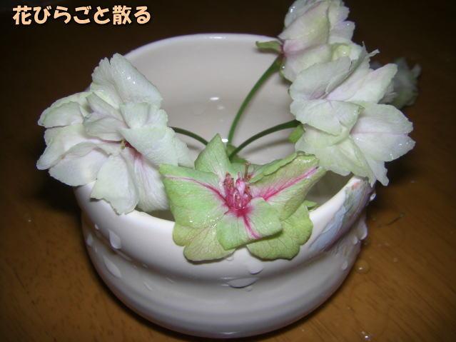 投稿) 南立石公園の樹木と花たち(1)  by:凛々_d0070316_4593317.jpg