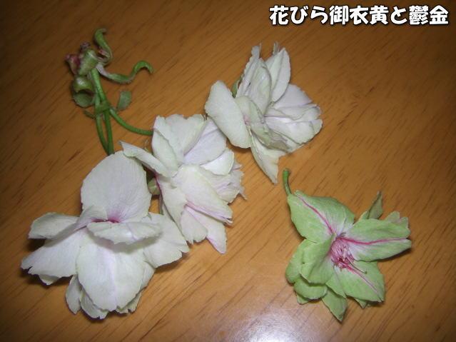 投稿) 南立石公園の樹木と花たち(1)  by:凛々_d0070316_50683.jpg