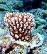 [ダイビング]南のポイントのサンゴたち_a0043520_2301432.jpg
