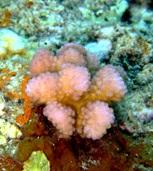 [ダイビング]南のポイントのサンゴたち_a0043520_2305993.jpg
