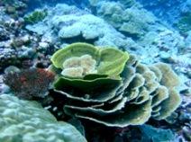 [ダイビング]南のポイントのサンゴたち_a0043520_2321798.jpg
