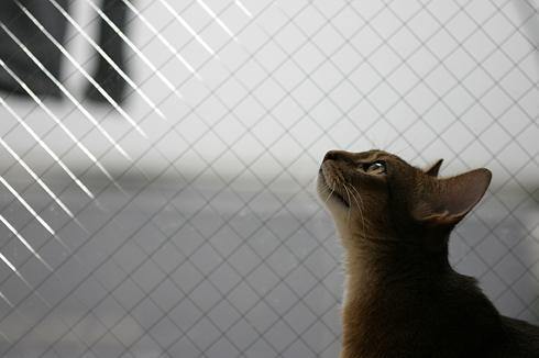 [猫的]上を向いて_e0090124_8332798.jpg