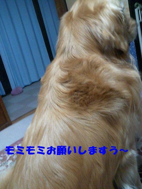 b0127531_23534477.jpg