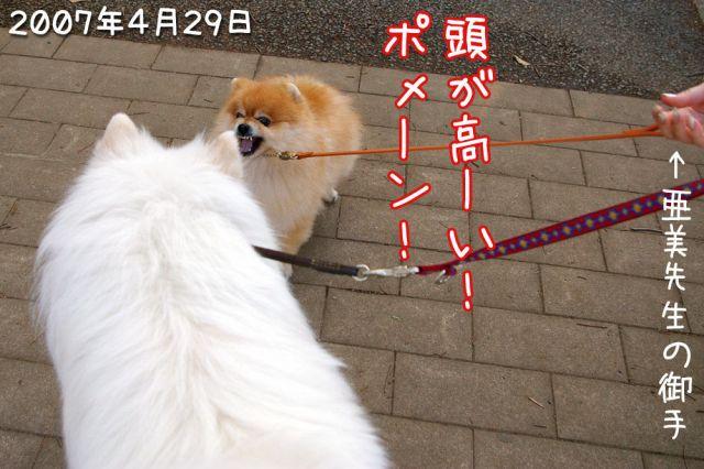 日曜日のお友達_c0062832_161529100.jpg