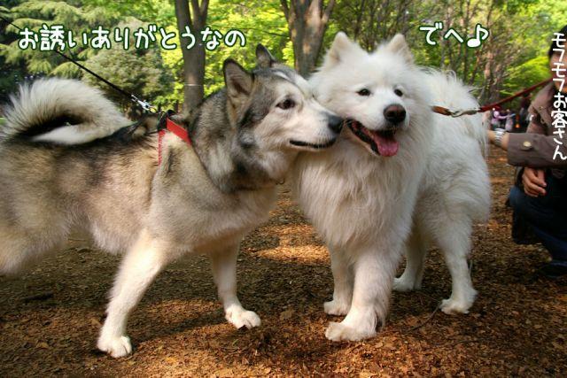 日曜日のお友達_c0062832_16173312.jpg