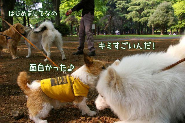 日曜日のお友達_c0062832_161855.jpg